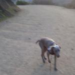 Confident, friendly, grateful adoptable: Hudson.